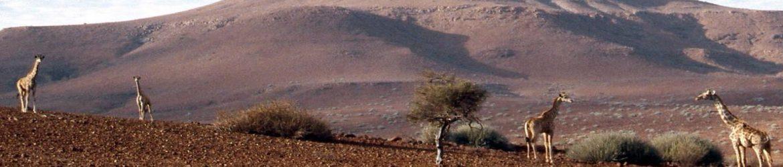 cropped-GiraffesNA.jpg